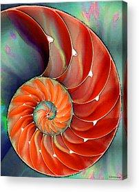 Shells Acrylic Prints