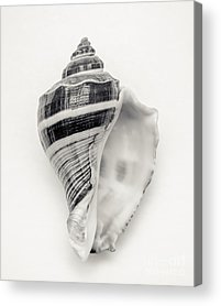Sea Shell Fine Art Acrylic Prints