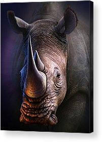 Rhino Acrylic Prints