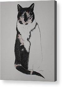 Spirit Cat Essence Acrylic Prints