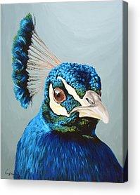 Peacock Acrylic Prints
