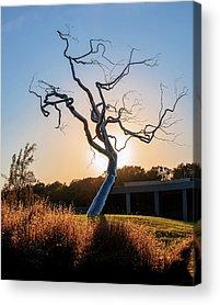 Dead Tree Photographs Acrylic Prints