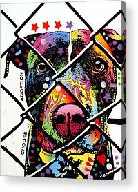 Pitbull Acrylic Prints