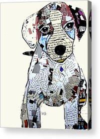Jack Russell Acrylic Prints