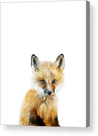 Fox Acrylic Prints