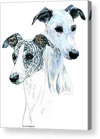 Greyhound Dog Acrylic Prints