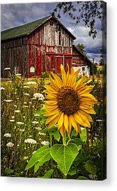 Pasture Acrylic Prints