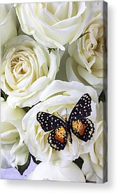Butterfly On Flower Acrylic Prints