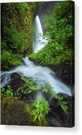 Designs Similar to Fern Falls by Darren White