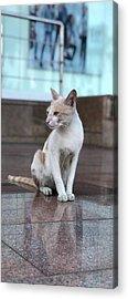 Cute Cat Acrylic Prints