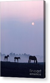 Early Morning With Fog Acrylic Prints
