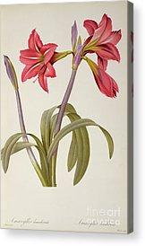 Botany Acrylic Prints