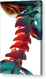 Biomedical Illustration Acrylic Prints