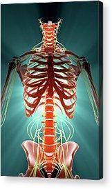 Skeleton Acrylic Prints
