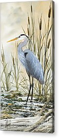 Great Blue Heron Acrylic Prints
