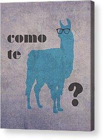 Llama Acrylic Prints