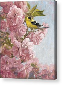 American Goldfinch Acrylic Prints