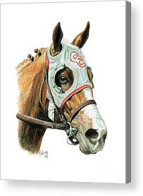 Thoroughbred Horse Acrylic Prints