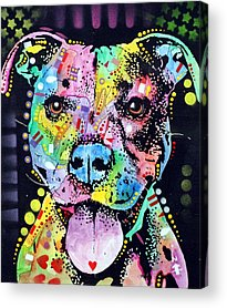 Pitbull Acrylic Prints
