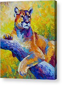 Cats Acrylic Prints