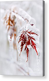 Icy Leaves Acrylic Prints