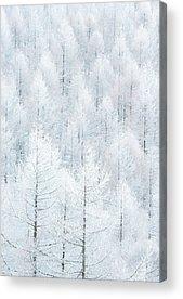 Hoar Frost Acrylic Prints
