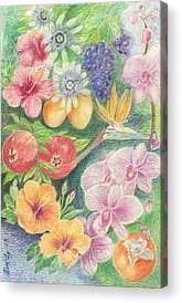 Passionfruit Drawings Acrylic Prints