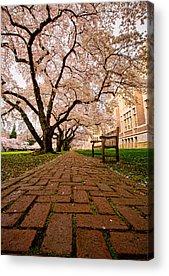 University Of Washington Acrylic Prints