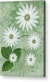 Petals Digital Art Acrylic Prints