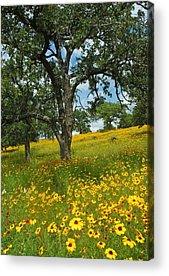 Flora Acrylic Prints