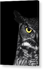 Owl Acrylic Prints