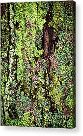 Lichen Acrylic Prints