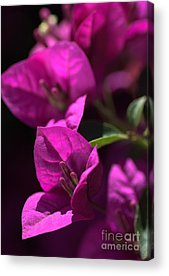 Living With Joy Photographs Acrylic Prints