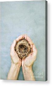 Empty Nest Acrylic Prints