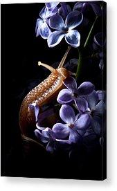Snail Acrylic Prints