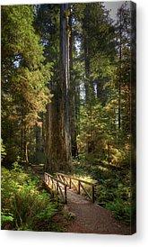 Redwood City Acrylic Prints