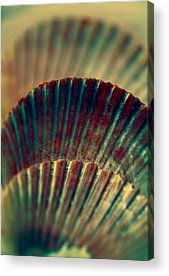 Shell Pattern Acrylic Prints