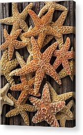 Starfish Acrylic Prints
