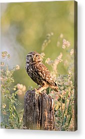 Early Spring Acrylic Prints