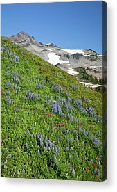 Goat Rocks Wilderness Acrylic Prints