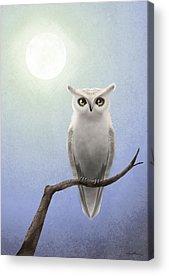 Barn Owl Acrylic Prints