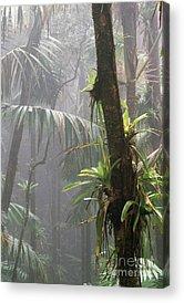 Epiphytic. Island Rainforest Vegetation Acrylic Prints