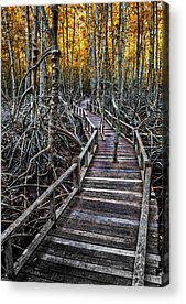 Mangrove Forest Photographs Acrylic Prints