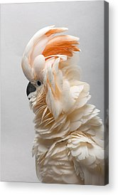 Cockatoo Acrylic Prints