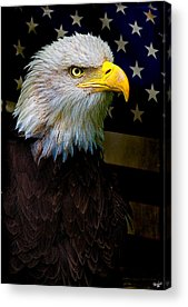 Eagle Acrylic Prints