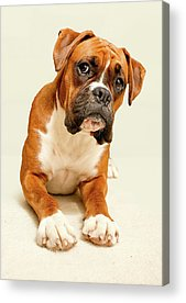 Dog Acrylic Prints