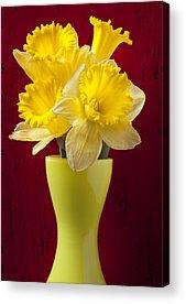 Yellow Trumpet Acrylic Prints