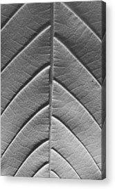 Leaf Venation Acrylic Prints