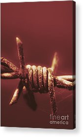 Barbed Wire Fences Acrylic Prints