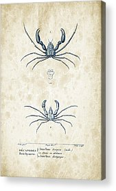 Crayfish Acrylic Prints